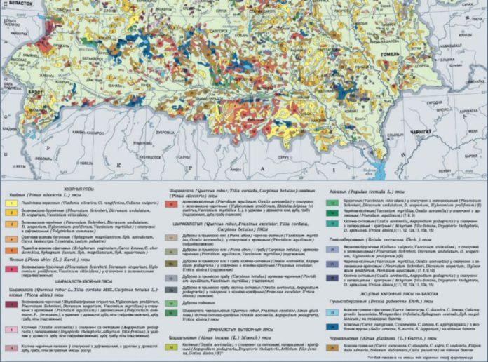 Карта лесов Гомельской области