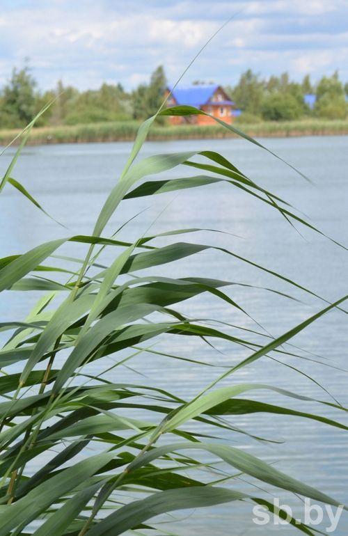 озеро, круглое, Гомельская область