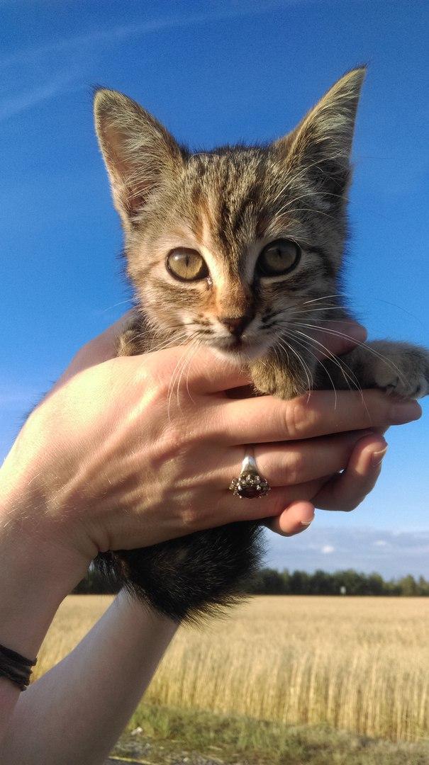 Кошечка на руках на фоне синего неба