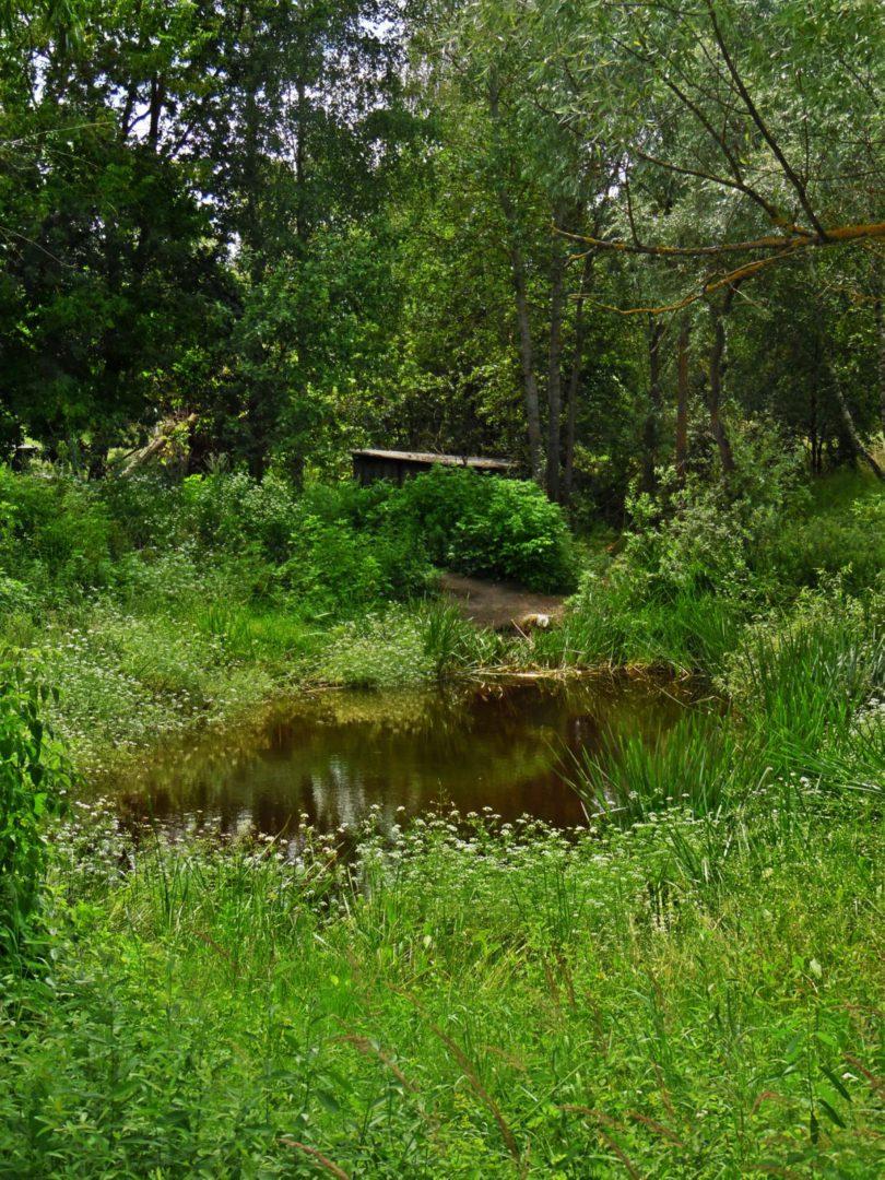 Пруд в деревне Физинки Наровлянского района