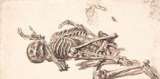 Рисунок скелета человека сделанный карандашом
