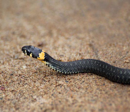 Сож в Гомеле извивается как змея.