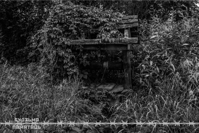 Чёрно-белая фотография заросшего колодца