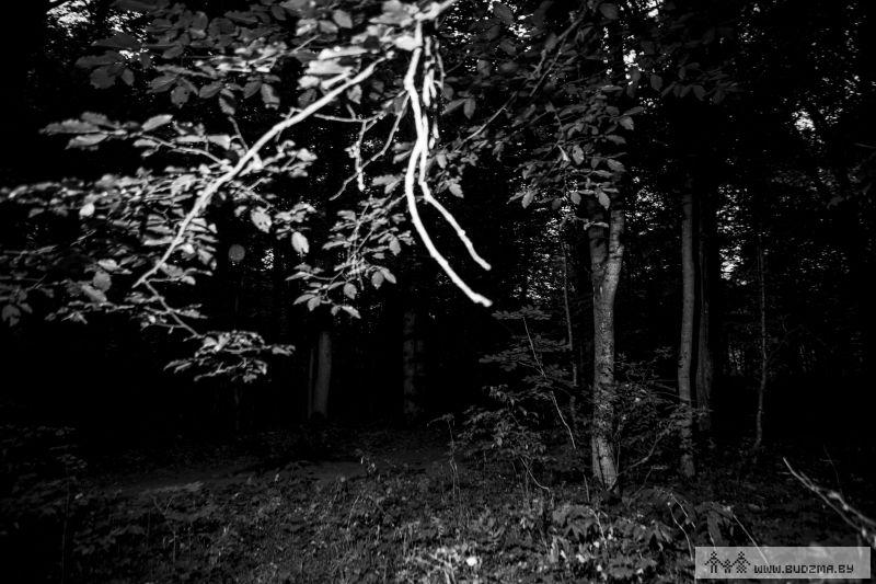 Фота начнога леса.