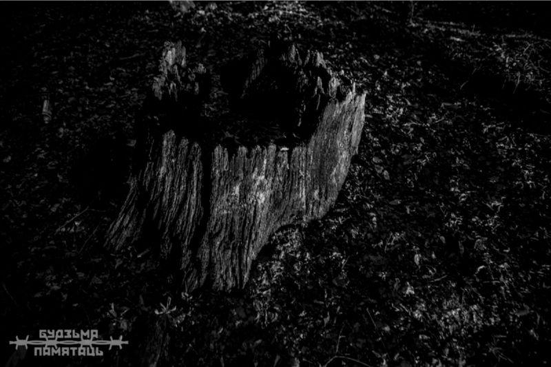 Черно-белое фото расколотого пня.