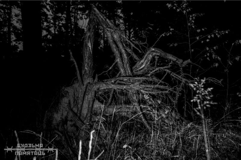 Чёрно-белое фото деревьев ночью.