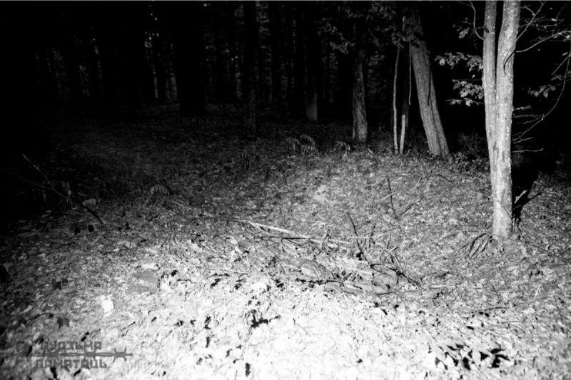 Праект Будзьма памятаць і растрэльны лес