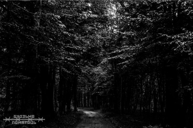 Тёмный лес ночью