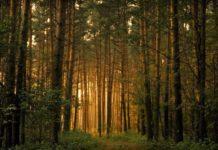 Сосновый лес и его исследование