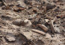 Старыя могілкі ў Гомелі плануюць забудаваць