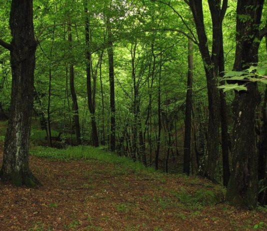 Современное экологическое состояние ландшафтного заказника Мозырские овраги