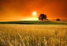 Сініцкае поле і захад сонца