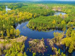 ООПТ и охране лесов в Беларуси