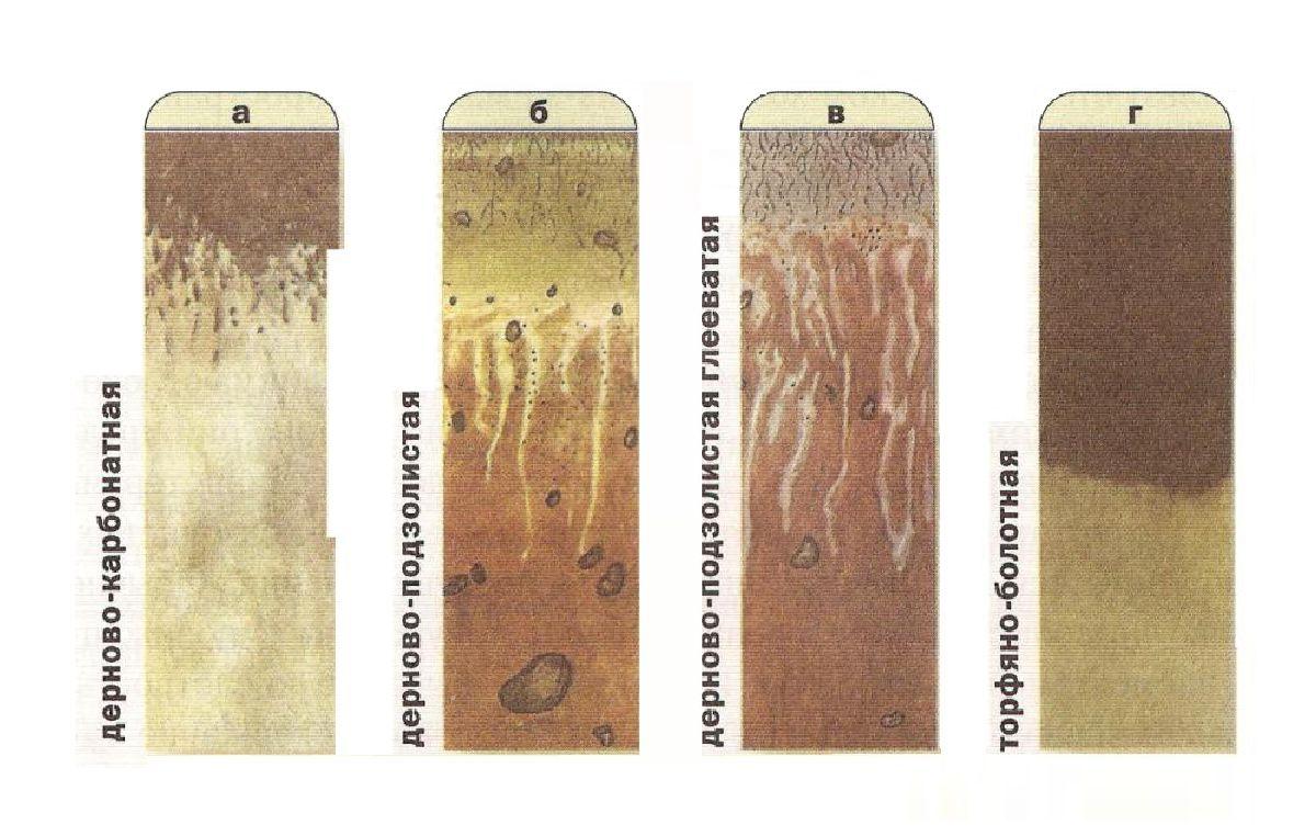 Генетический профиль почв Гомельской области