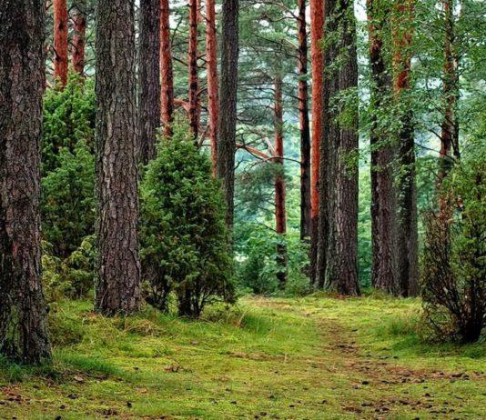 Лесовосстановление Беларусь