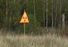 Лесная культура и радиация лес Беларусь