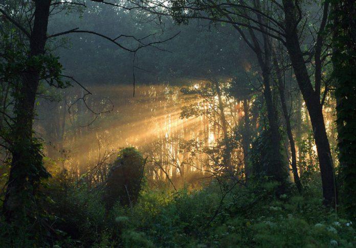 экологический туризм в Гомельской области