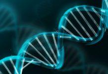 лейкогенез детей