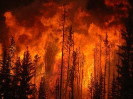 перенос радионуклидов с дымом пожаров