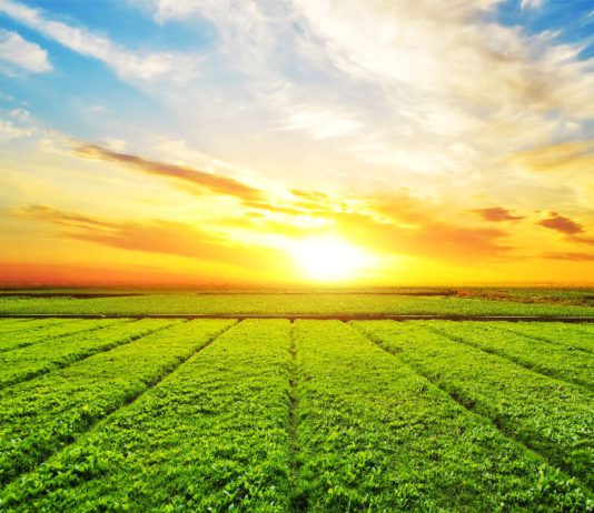 Сельское хозяйство Жлобинского района