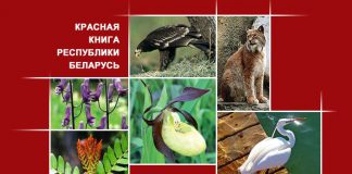 Животные Гомельской области, занесенные в Красную книгу Республики Беларусь