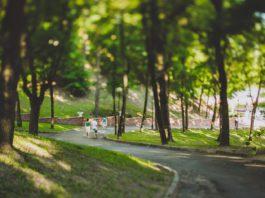 Древесно-кустарниковая растительность Гомельский дворцово-парковый ансамбль