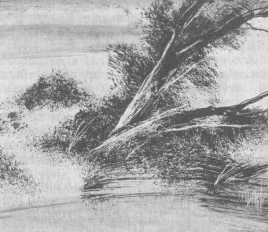 Дзям'янкі