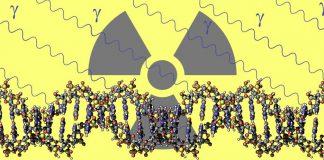 Оценка заболеваемости раком пузыря Беларусь