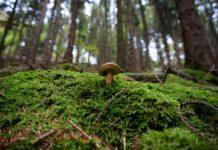 гранулометрический состав лесных почв припятского Полесья