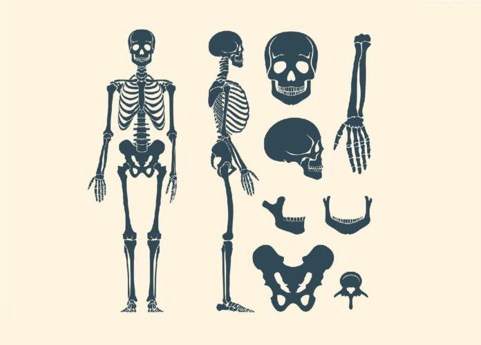 костные останки из Моховского могильника и антропологическое определение их