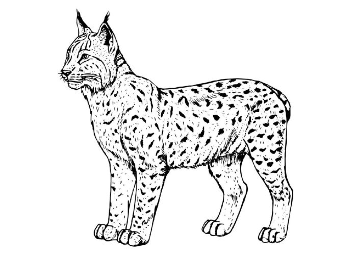 Символ рыси. герб Гомеля