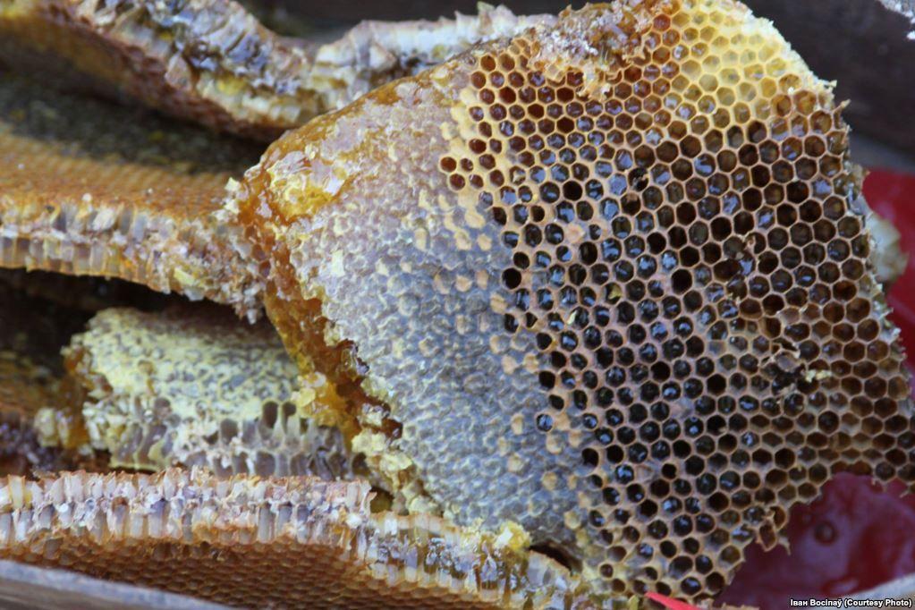 Мёд і соты