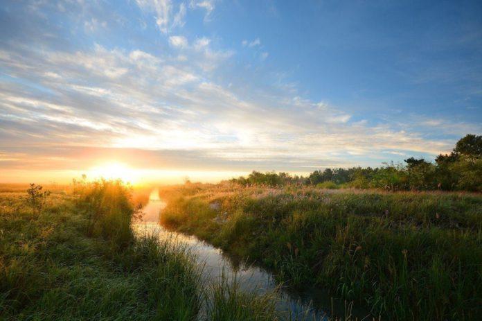 Фитосозологическая ценность приднепровской части Восточное Полесье