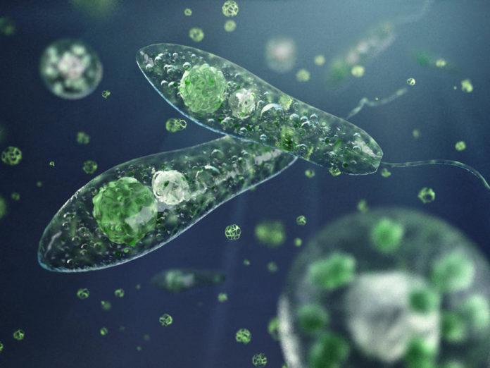 Ротаторный планктон водных экосистем белорусского Полесья