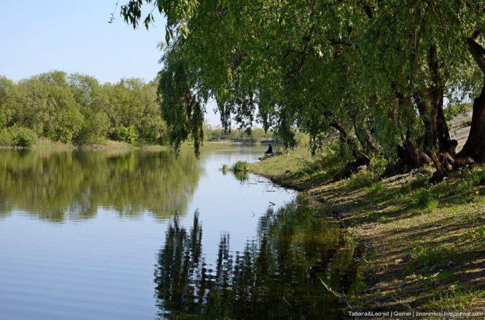 Экологическое состояние городских водоемов, подверженных антропогенному прессу