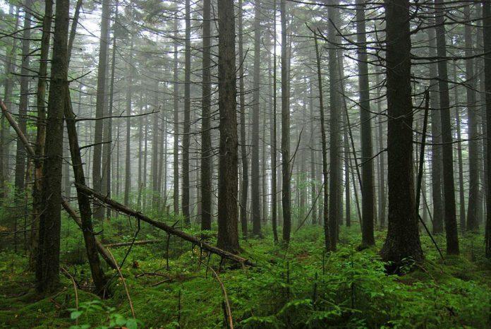 Оценка состояния древостоя двух типов леса Гомельской области