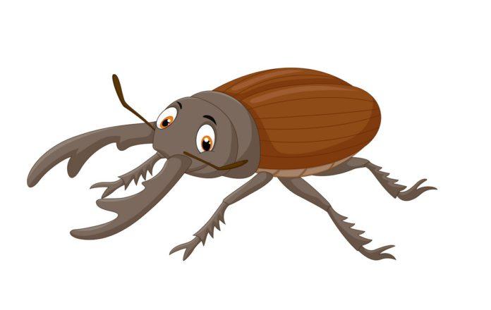 К экологии жук-рогач и бронзовок (Coleoptera, Lucaninae, Cetoniinae) юго-востока беларуси