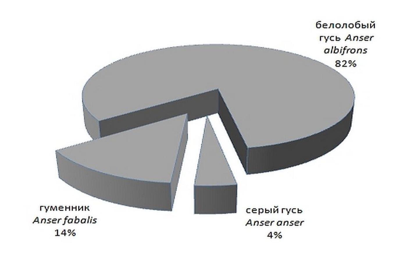 Рисунок 2 — Соотношение различных видов гусей на примере весенней миграции 2013 г., точка наблюдений «Туровский луг»
