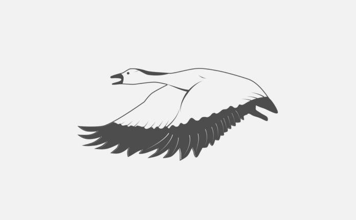 Видимая весенняя миграция гусей в пойме реки Припять