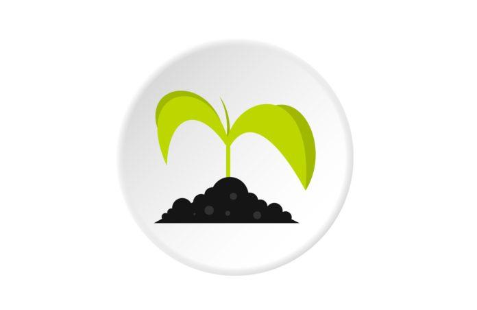 Экология почв города Гомеля