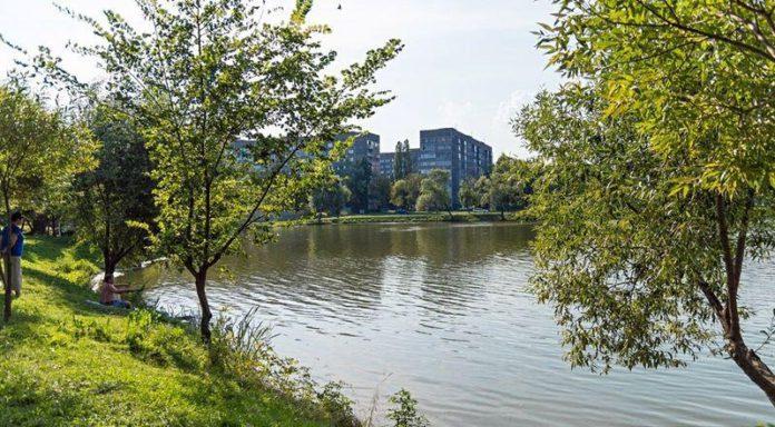 Состояние прибрежно-водной растительности озеро Сельмашевское г. Гомеля