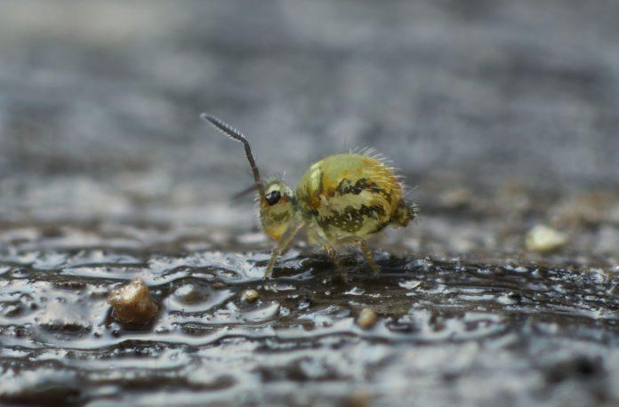 Герпетобионтные жесткокрылые (Entognatha, Coleoptera)