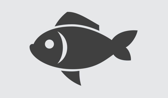 Лексіка-семантычная характарыстыка назваў рыб