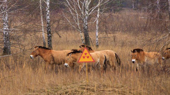 Влияние продуктов аварийного выброса Чернобыльской АЭС на отдельные популяции диких млекопитающих