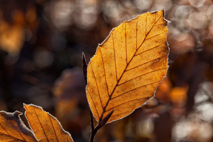 Использование коэффициента флуктуирующей асимметрии листьев для анализа антропогенной нагрузки на окружающую среду на примере города Гомеля