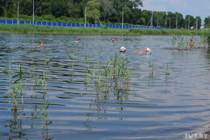 Эколого-геоботанические особенности растительности рудерально-болотного комплекса г. Гомеля