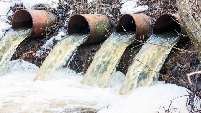 Содержание никеля, кобальта и свинца в растениях водоёмов г. Гомеля и прилегающих территорий