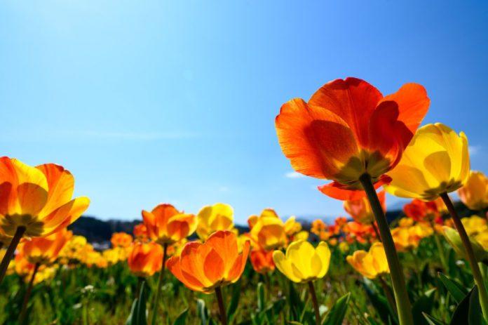 Веснавыя абрады і звычаі Акцябрскага раёна