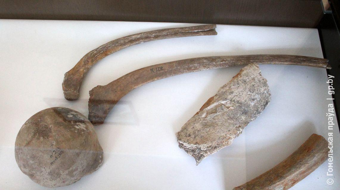 Останки древнего человека