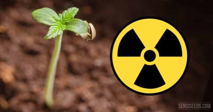 Радиоактивное загрязнение почвы Гомельской области